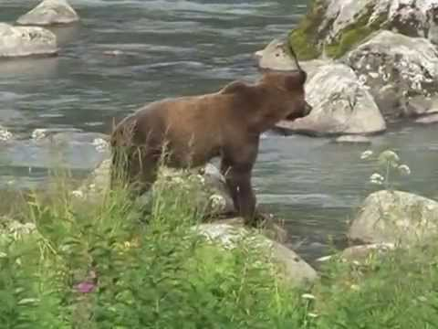 Alta Expedition Wild Yukon Alaskan Gold Rush Part 1