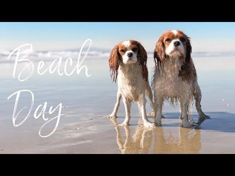 WHAT TO BRING ON A DOG BEACH DAY | Dog Friendly Beach Huntington Beach California