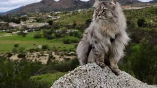 Raising an Adventure Cat: How to Harness Train Your Cat