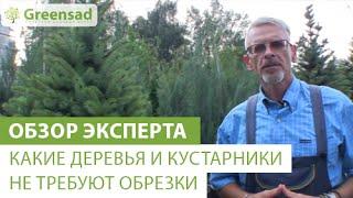 видео Обрезка декоративных деревьев
