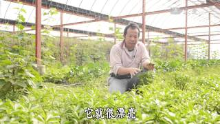 【蔬果生活誌】20150510 - 植物的療癒力