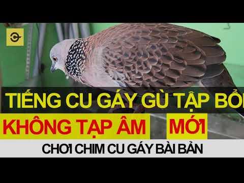 Tiếng Chim Cu gáy GÙ Tập bổi mới nhất