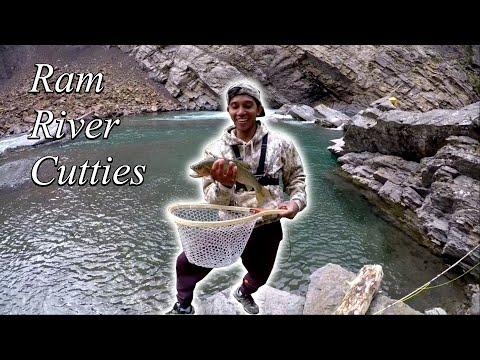 Ram River Cutthroat (RAM RIVER FALLS  ALBERTA)