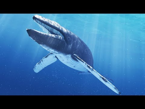 (Documentary)  Excellent Appearance of Blue Whales