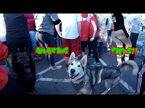 Husky Shows AMAZING Speed & Strength (Marathon By The Ocean Jingle Bell Run)