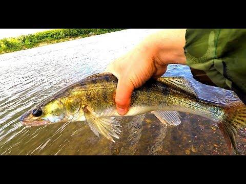 на что клюет рыба на оке