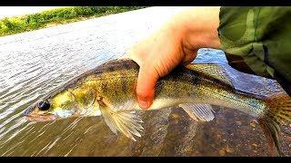 Рыбалка и Отдых на Оке | В Алексин к Брату