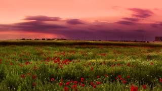 Красивая инструментальная музыка для души. Michel Legrand - Саксофон