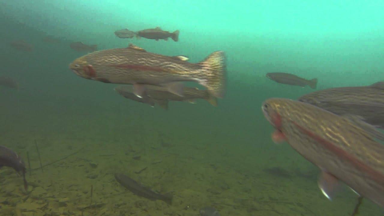 Amazing gopro ice fishing footage black hills south for Ice fishing south dakota