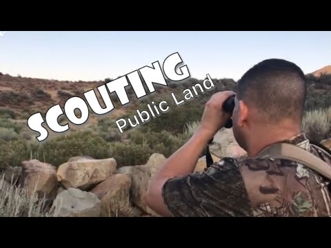 Deer Scouting A-zone/Public Land In Los Padres National Forest