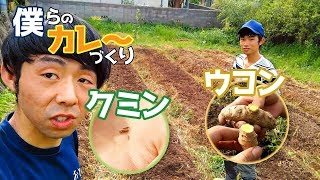 Gambar cover 【僕カレ~】vol.1ウコンとクミンを植える