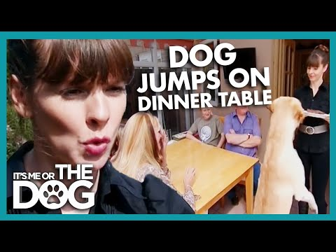 How To Stop Your Dog Jumping Up At The Table - YouTube