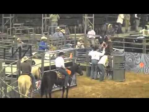 Speed Williams Brad Culpepper 1st Steer 2013 Houston Rodeo