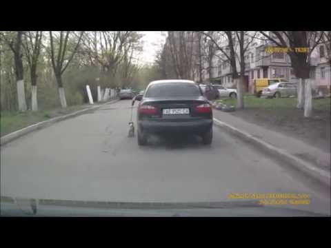 Funny dog. Прикол. Мужик гуляет с собакой не выходя из машины