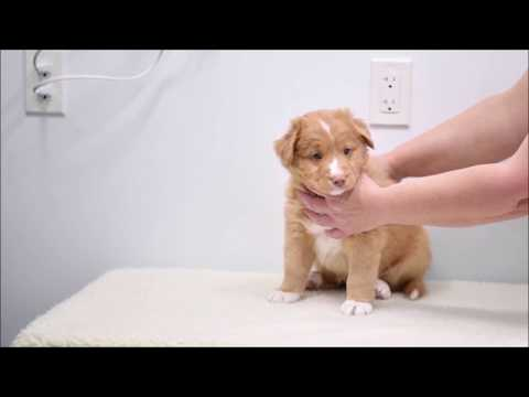 Pink's Puppies Present: Mr. Red (week 6)