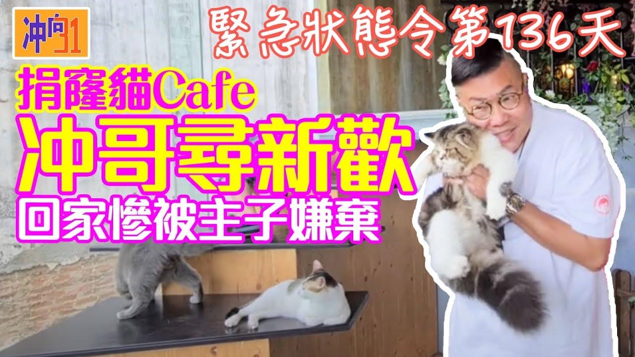 泰國曼谷又有一間新開貓Cafe,星級仲要係啱晒醉貓