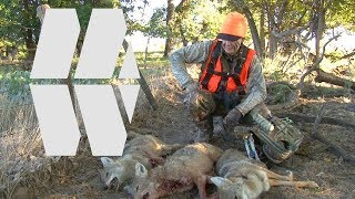 CRAZY! 3 Coyotes with bow in 45 seconds!!