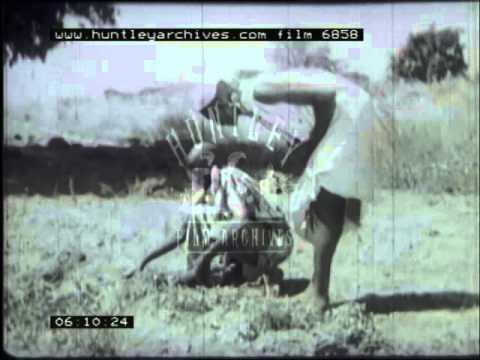 Agriculture in Nigeria, 1950's - Film 6858