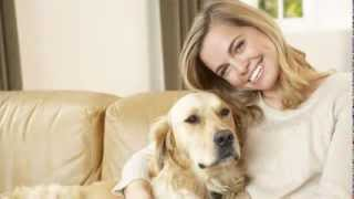 Dog Training Tips - Get Your Dog To Listen To You Now!