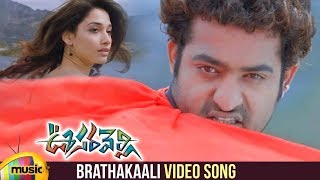 Brathakaali Video Song | Oosaravelli Telugu Movie | Jr NTR | Tamanna | DSP | Mango Music