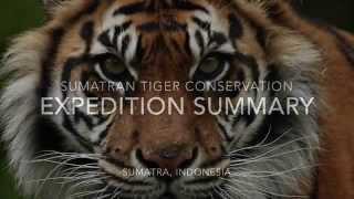 Sumatra tiger expedition summary