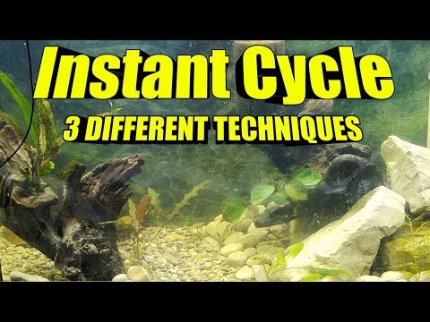 FAST Freshwater Fish Tank Instant Cycle  | 3 BEST Methods for an Aquarium Cycle