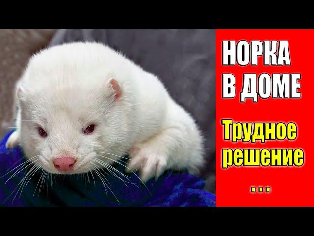 НОРКА В ДОМЕ / ТРУДНОЕ РЕШЕНИЕ