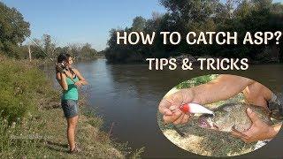 How to Catch Asp? Fishing Tips & Tricks/ Rapfenangeln: Tipps und Tricks/ Съвети за Риболов на Распер