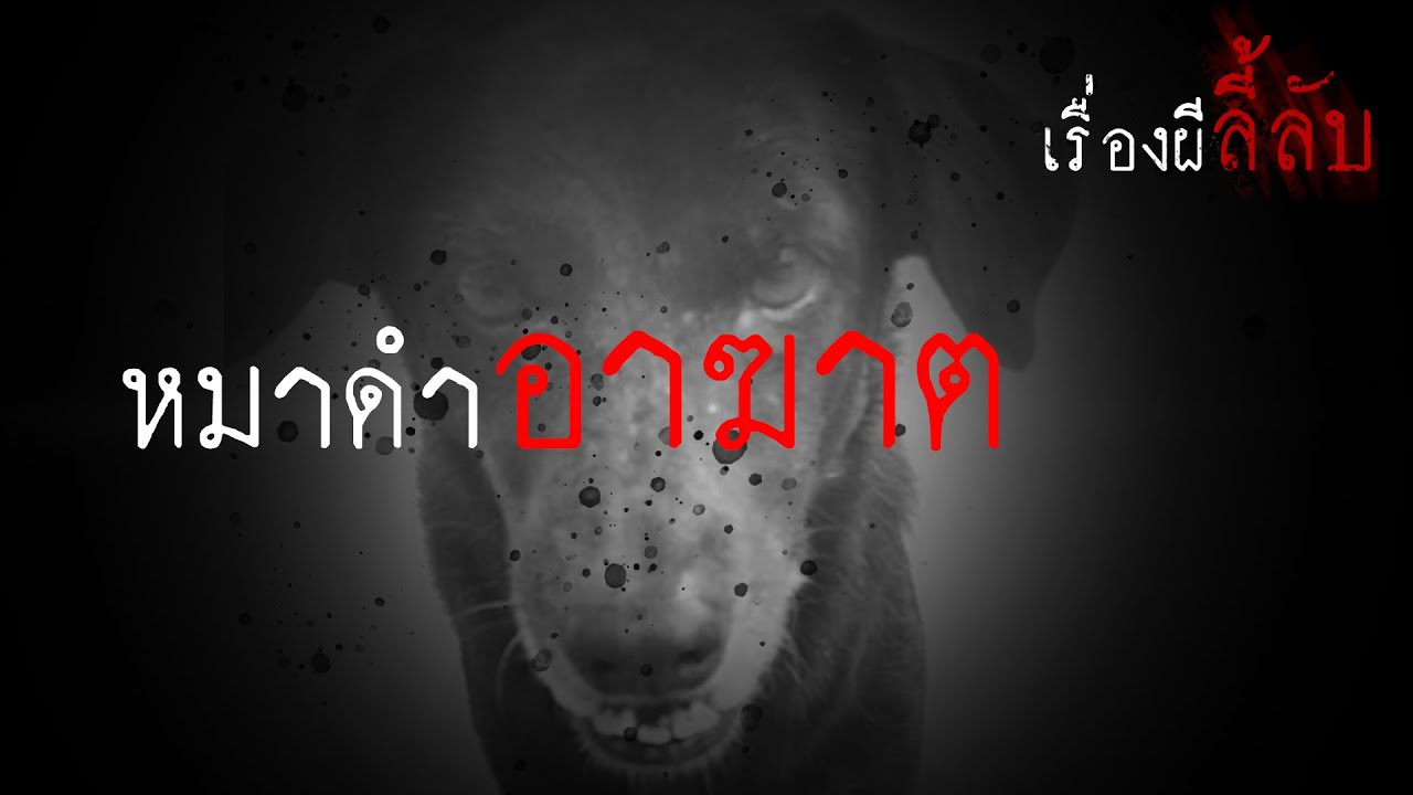 เรื่องผีลี้ลับ EP.11 | หมาดำอาฆาต