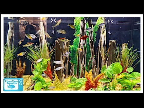 Fish Store Tour - Aquatics Unlimited - This Place is HUGE!