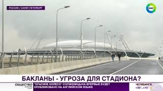Пернатые вандалы: бакланов обвинили в порче крыши «Зенит-Арены» - МИР24