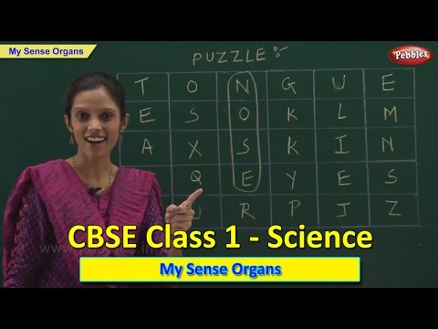 Sense Organs | Class 1 CBSE Science | Science Syllabus Live Videos | Video Training