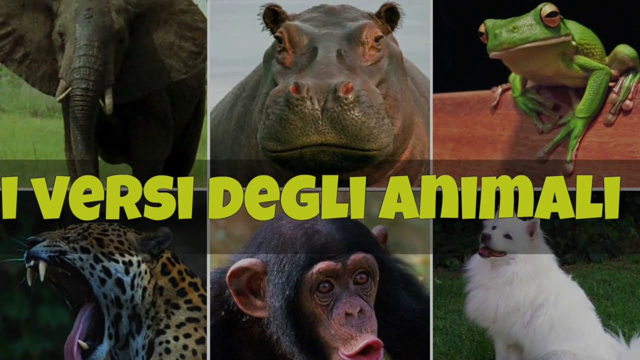 I versi degli animali per bambini youtube