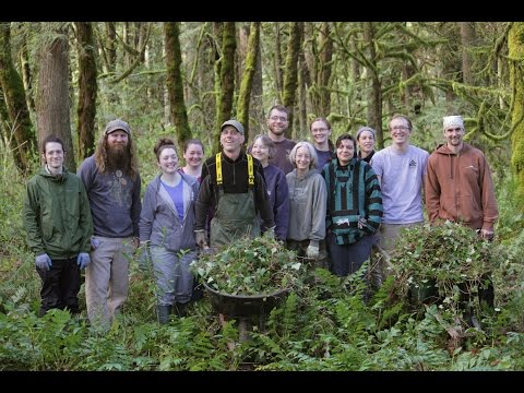 Mountain Rose River Project - Pulling English Ivy