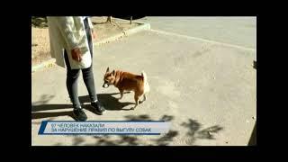 97 балхашцев оштрафовали за нарушение правил выгула собак