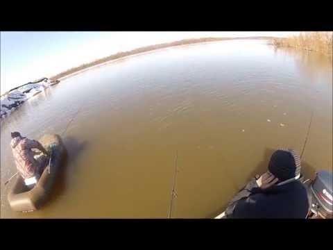 ловля судака в апреле на оке