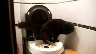 туалет тренажер для кота, как приучить кота к унитазу ч1 toilet trainer for cat part 1