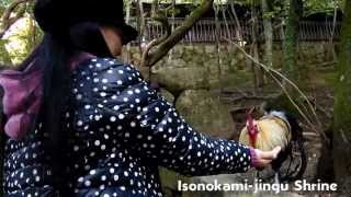 Baixar A Glimpse into the world of Minami Yoshida