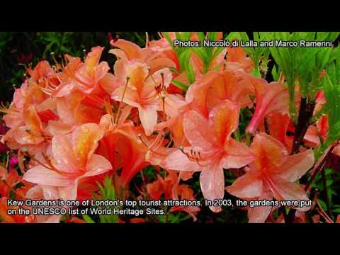 Kew Gardens, London, England - United Kingdom