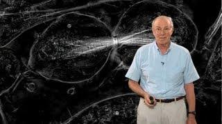 Microscopy: Polarization (Edward Salmon)