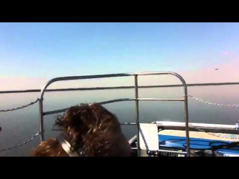 black hammock airboat ride black hammock airboat ride   youtube  rh   youtube