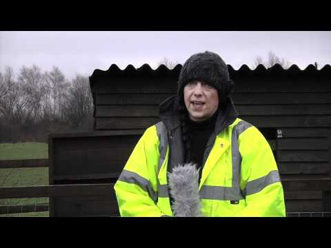 Lucky Hens Rescue - Wigan - A Conversation with Alison Thorpe