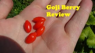 Goji berry review - Not what I expected(Sweet life Goji berry review. Goji berries must be an acquired taste because these were not good!, 2015-07-23T23:57:06.000Z)