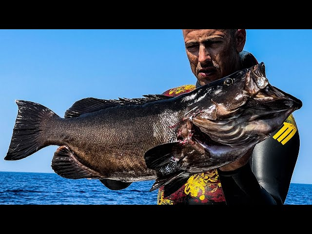 MASSIVE Fish😲The Best Of Summer |Spearfishing Life 🇬🇷