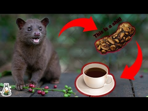 How the most expensive coffee is made?