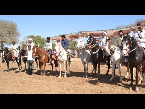 Mega Ashwa show 2017 India horse