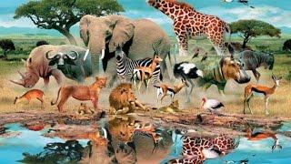 Как говорят и выглядят животные для самых маленьких.