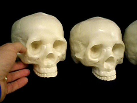 New Lightweight Life Size Skull -- Hard Foam 2/2 - YouTube