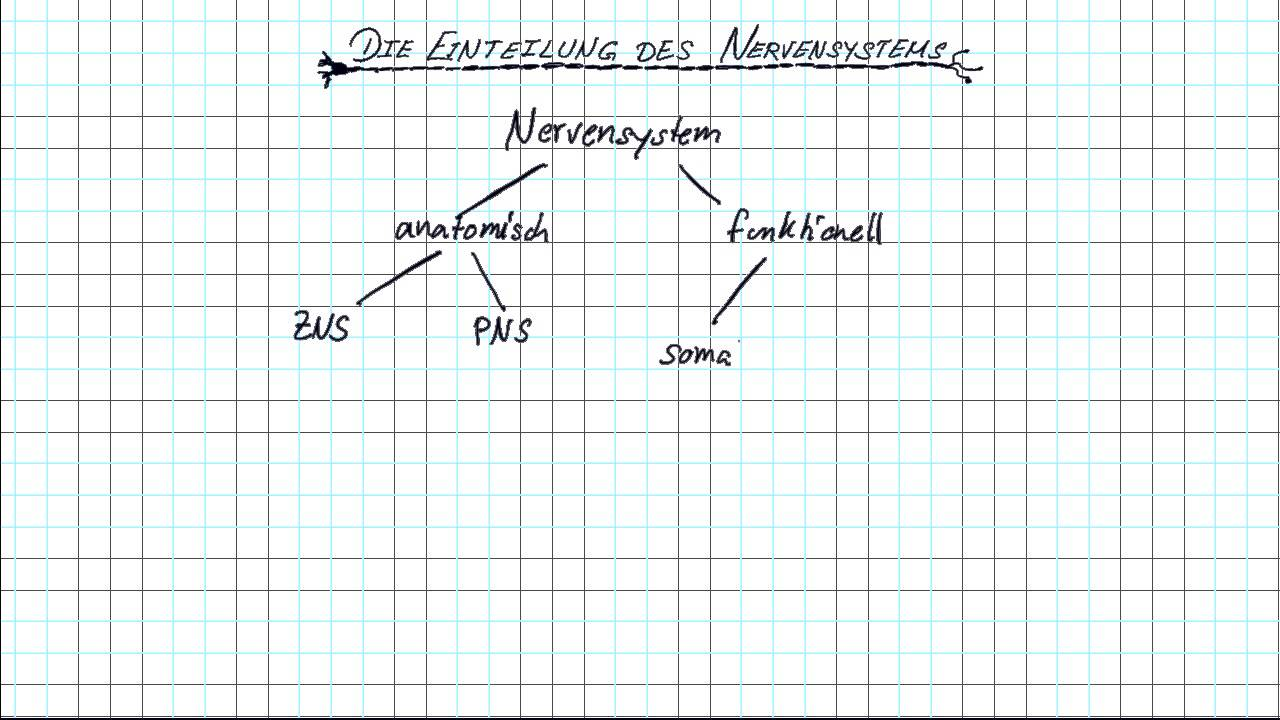 Das Nervensystem - YouTube