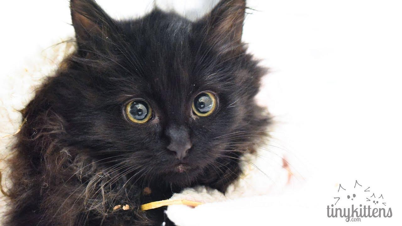 Live Newborn Rescue Kittens Meet The Gilmore Girls